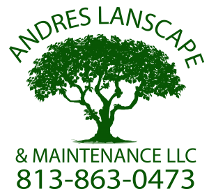 Andres Lanscape